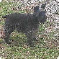 Adopt A Pet :: Rosie - Irmo, SC