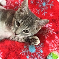 Adopt A Pet :: Julep - Butner, NC