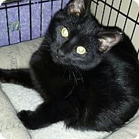 Adopt A Pet :: Destiny (Inspiration) - Baltimore, MD