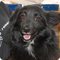Adopt A Pet :: Dutch - Brooklyn, NY