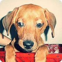 Adopt A Pet :: Red - Dayton, OH