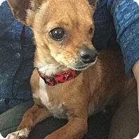 Adopt A Pet :: Elliot - Vacaville, CA