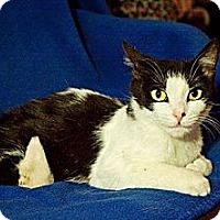 Adopt A Pet :: Daisy - East Hanover, NJ