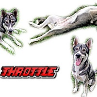 Adopt A Pet :: Throttle - Seminole, FL
