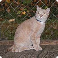Adopt A Pet :: Yoda - Dover, OH