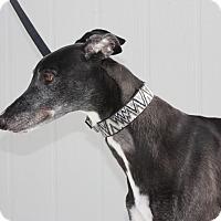 Adopt A Pet :: Toto - Rancho Santa Margarita, CA