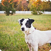 Adopt A Pet :: Molly - Peachtree City, GA