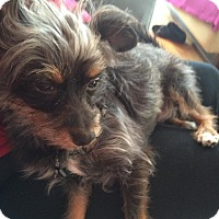 Adopt A Pet :: Lupe - Chicago, IL