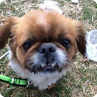Adopt A Pet :: Tank - Knoxville, TN
