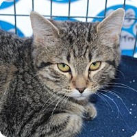 Adopt A Pet :: Gemma - Caistor Centre, ON