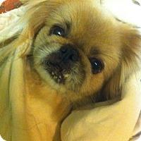 Adopt A Pet :: Daisy - Oklahoma City, OK