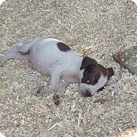Adopt A Pet :: Wrangler - Chewelah, WA