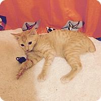Adopt A Pet :: Han - Simpsonville, SC