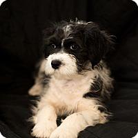 Adopt A Pet :: Terry - Daleville, AL