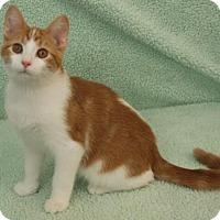 Adopt A Pet :: Quimby - Elkhorn, WI