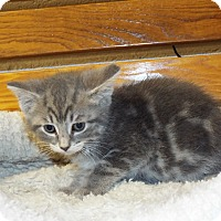 Adopt A Pet :: Colby - Shelby, MI