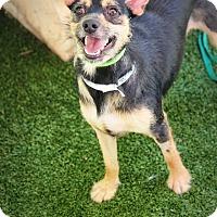 Adopt A Pet :: Bo - Ft. Lauderdale, FL