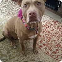 Adopt A Pet :: EVA (COURTESY POSTING) - Phoenix, AZ