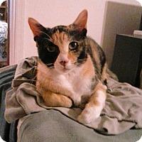 Adopt A Pet :: Athena - Colmar, PA