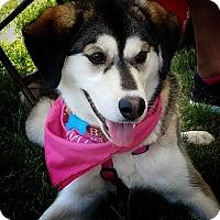 Adopt A Pet :: Annie - Brooklyn Center, MN