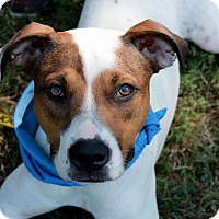 Adopt A Pet :: Dakoda - Youngsville, NC