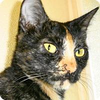 Adopt A Pet :: Moxie - Georgetown, TX