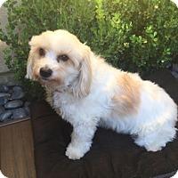 Adopt A Pet :: Maxwell - Temecula, CA