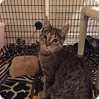 Adopt A Pet :: Jimmy Pesto Jr. - Chicago, IL