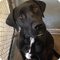 Adopt A Pet :: Jayce - Towson, MD