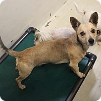 Adopt A Pet :: A23 Logan - Odessa, TX
