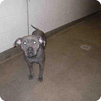 Adopt A Pet :: ELLIE - Jacksonville, FL