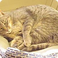 Adopt A Pet :: Ozzy - Saginaw, MI