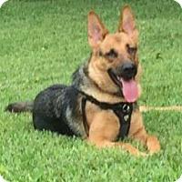 Adopt A Pet :: Skyler - Clearwater, FL