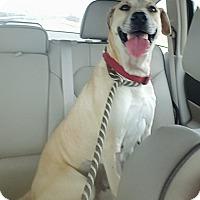 Adopt A Pet :: Lindy - san antonio, TX