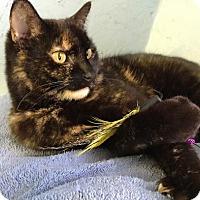 Adopt A Pet :: MizTortie - Flint HIll, VA