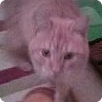 Adopt A Pet :: Cheddar - Parlier, CA