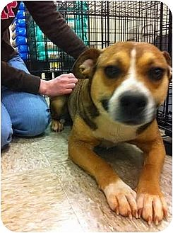 Beagle/Terrier (Unknown Type, Small) Mix Dog for adoption in Blanchard, Oklahoma - Cindy