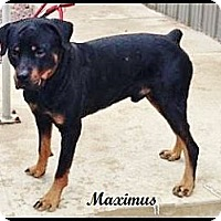 Adopt A Pet :: Maximus - Darlington, MD