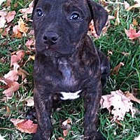 Adopt A Pet :: Nellie - Chattanooga, TN