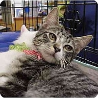 Adopt A Pet :: Infinity 3 - The Colony, TX