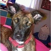 Adopt A Pet :: Payson - Phoenix, AZ