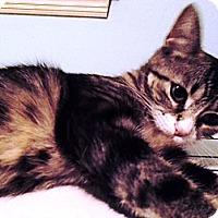 Adopt A Pet :: Phoebe - Speonk, NY