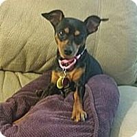 Adopt A Pet :: MISS GEORGIA PEACH - Higley, AZ