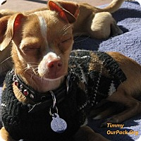Adopt A Pet :: Timmy - San Jose, CA
