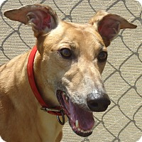 Adopt A Pet :: Ale Candee - Longwood, FL