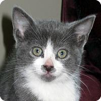 Adopt A Pet :: Brite Eyes - Calgary, AB