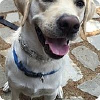 Adopt A Pet :: Tank - Torrance, CA