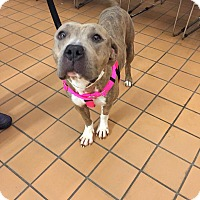Adopt A Pet :: Milly - Villa Park, IL