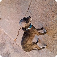 Adopt A Pet :: Rocky - Edmond, OK