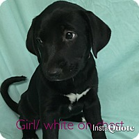 Adopt A Pet :: Jane Austen - Cumming, GA